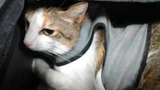 cat on plane